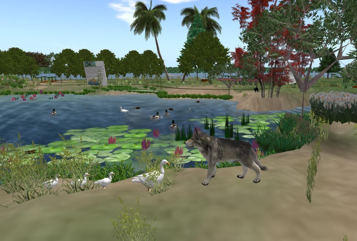 Wolf und Gänse treffen am Rande des Seerosenteichs friedlich aufeinander.